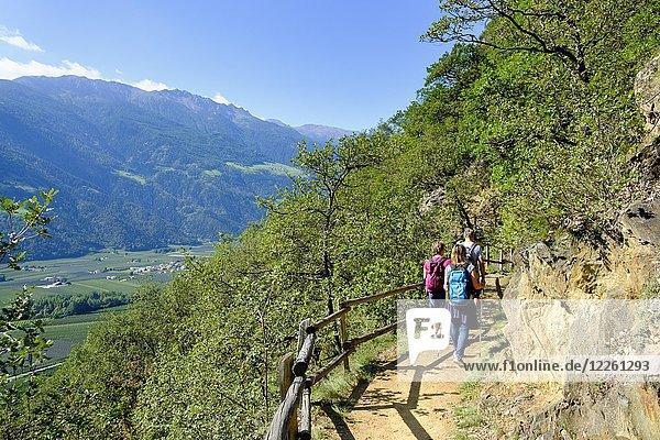 Wanderer am Sonnenberger Panoramaweg  Naturns  Vinschgau  Südtirol  Italien  Europa