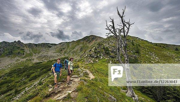 Wanderer bei einem vertrockneten Baum  Schladminger Höhenweg  Schladminger Tauern  Schladming  Steiermark  Österreich  Europa