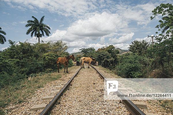 Kuba  Zwei Pferde auf Schienen