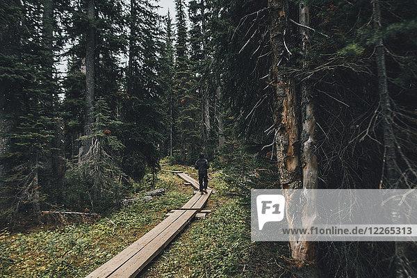 Kanada  British Columbia  Yoho-Nationalpark  Mann wandert auf Promenade durch den Wald