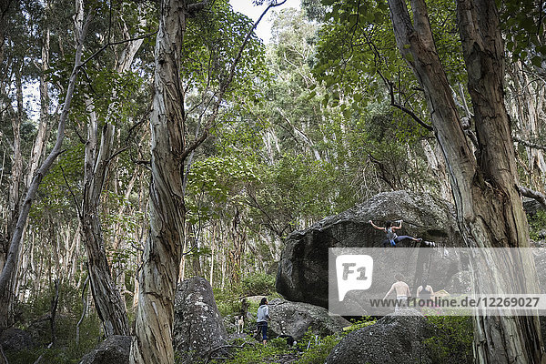 Woman climbing boulder in forest  others watching  Oahu  Hawaii  USA