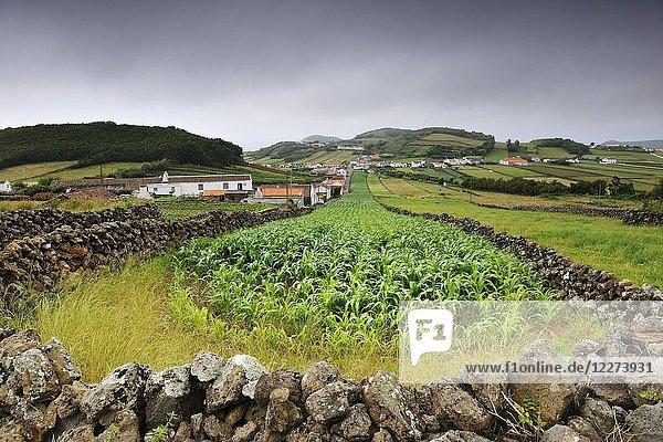The rural landscape in Esperança Velha. Graciosa island  Azores. Portugal.