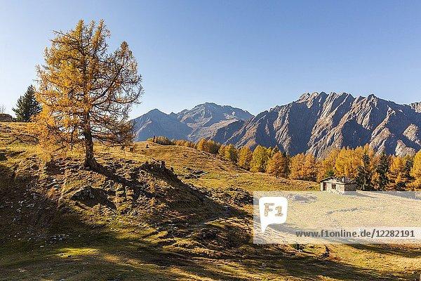 Alpine landscape in autumn at Alpe Granda  Valtellina  province of Sondrio  Lombardy  Italy.