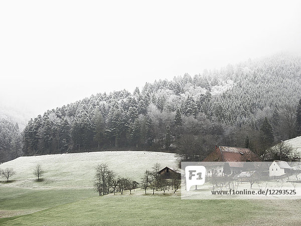Farmhouse Hofbauernhof  snowy meadows and forest in little village in the Middle Black Forest  Elzach-Yach  Baden-Württemberg  Germany.