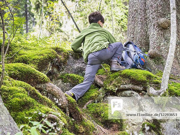 Girl hiking in black forest  Feldberg  Baden-Württemberg  Germany