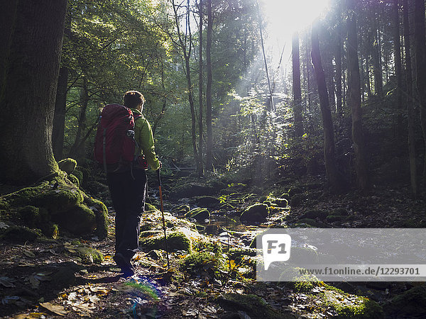 Woman on hiking tour in the Northern Black Forest  Monbachtal  Bad Liebenzell  Baden-Württemberg  Germany