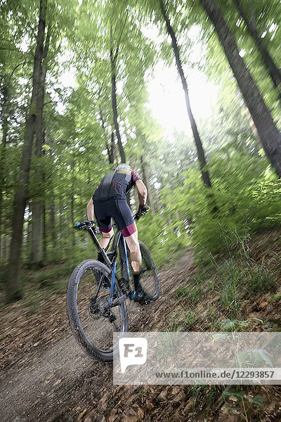 Mountain biker riding uphill on forest path
