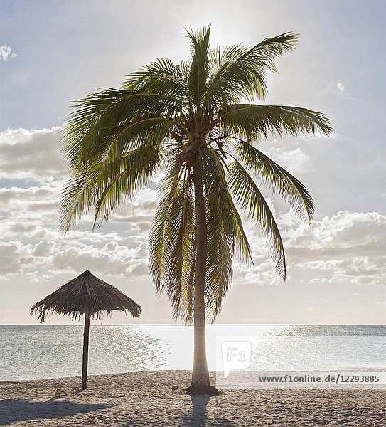 Scenic view of Playa Ancon beach and palm tree  Trinidad  Cuba