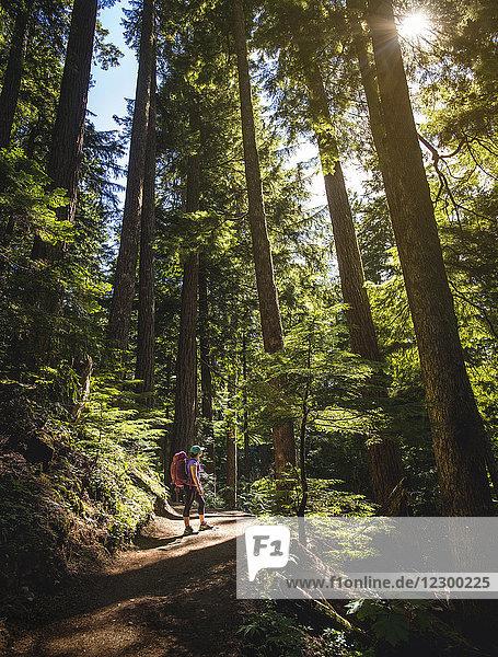 Female hiker admiring tall forest trees in Garibaldi Provincial Park  British Columbia  Canada