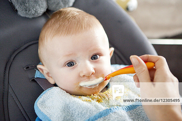 Young mother spoon feeding her baby boy  Kerroch  Brittany  France
