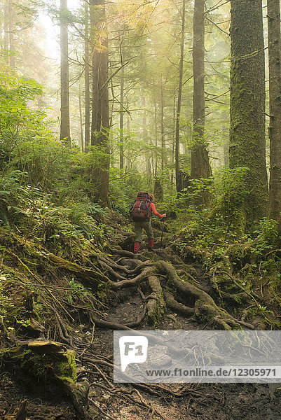 Rear view of female backpacker walking through forest while hiking along West Coast Trail  Pacific Rim National Park on Vancouver Island  British Columbia  Canada
