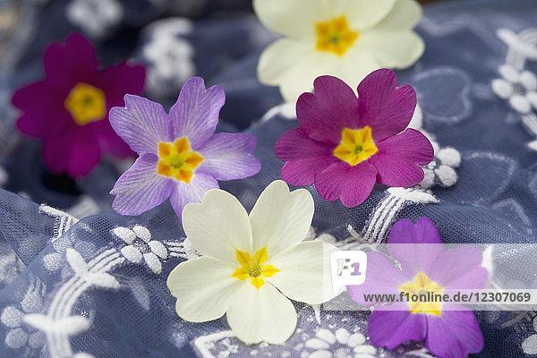 Primelblüten auf floral gemustertem Stoff