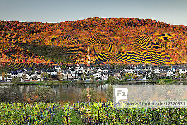 View of Merl district  Moselle Valley  Zell an der Mosel  Rhineland-Palatinate  Germany  Europe