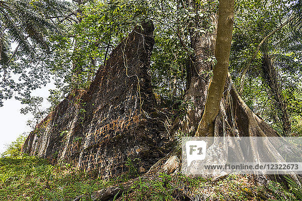 Old ruins of the former slave colony on Bunce island  Sierra Leone  West Africa  Africa