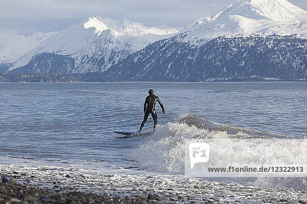 Surfer in Kachemak Bay  South-central Alaska; Homer  Alaska  United States of America
