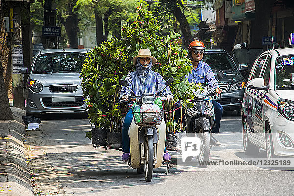 Woman carrying large plants on a motorcycle in the Old Quarter; Hanoi  Hanoi  Vietnam