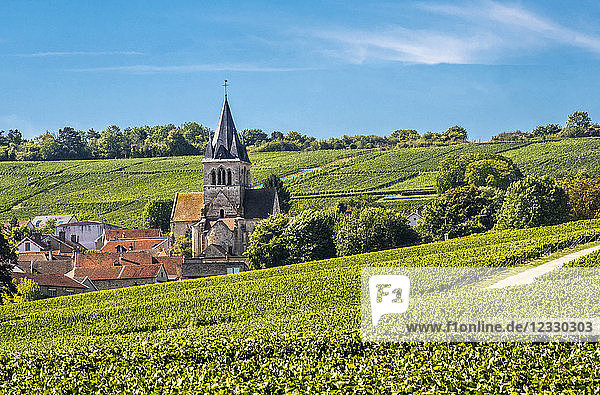 France  Grand Est  Marne  Ville Domange in the middle of the vineyards  Coteaux de Champagne