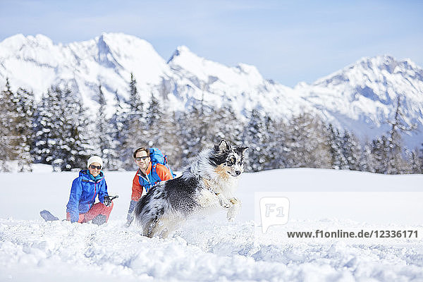 Austria  Tyrol  snowshoe hikers and dog  jumping in the snow