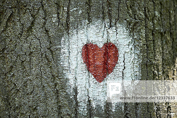 Heart painted on tree trunk