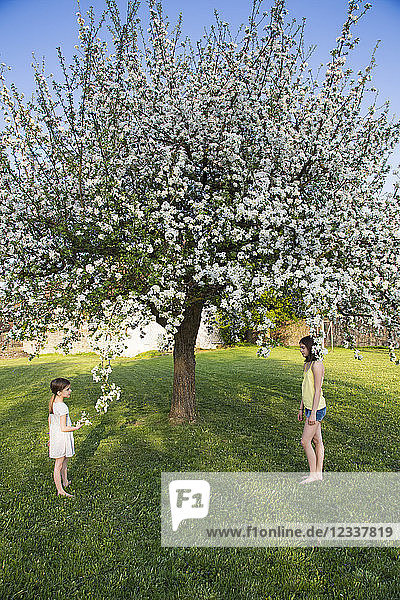 Two girls standing barefoot in the garden in front of blossoming apple tree