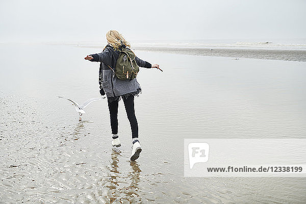 Netherlands  back view of young woman with backpack walking behind a seagull on the beach