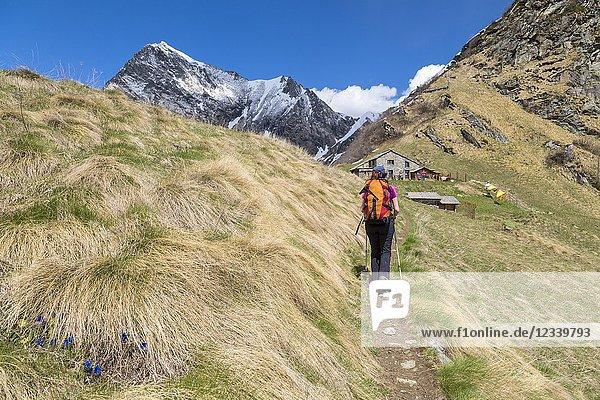 A girl is walking towards the Sattal Alp (Sattal Alp  Alagna Valsesia  Valsesia  Vercelli province  Piedmont  Italy  Europe).