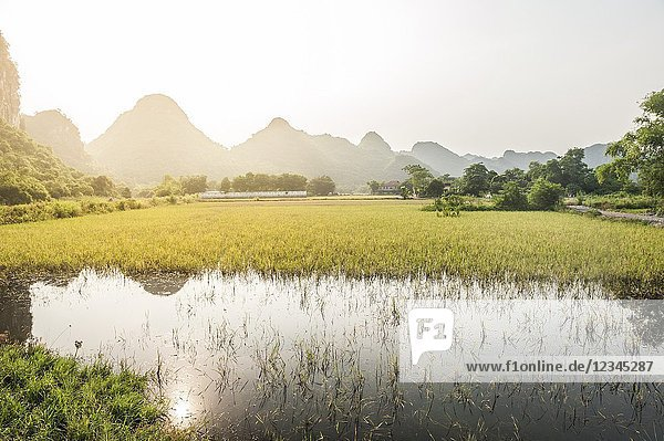 Sunset over rice paddies of Tam Coc in Trang An karst Landscape Complex (Ninh Binh province  Vietnam).