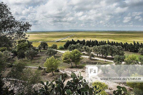 Rice fields from the Montaña de los Santos (Mountain of the Saints)  Sueca  Valencia  Spain