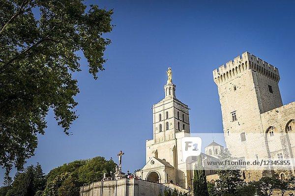 Notre Dame des Doms Cathedral in Avignon (department of Vaucluse  region of Provence-Alpes-Côte d'Azur  France).