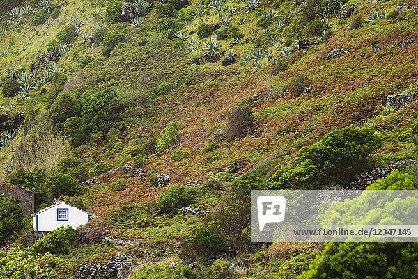 Portugal  Azores  Santa Maria Island  Maia  houses and volcanic rock vineyards.