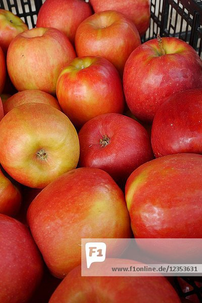 A carton of red apples.