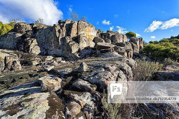 Granite rocks with moss between pines and cistus in Concejo Pinewood. Cadalso de los Viddrios. Madrid. Spain.