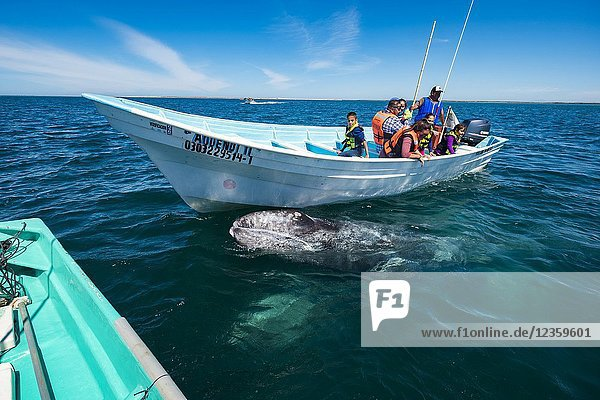 Whale watching in Magdalena Bay in Baja California Sur in northern Mexico.