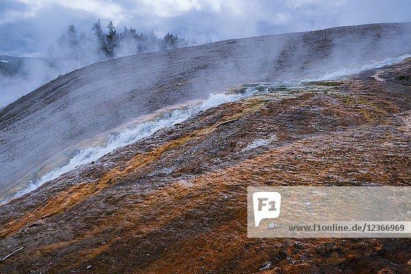 Grand Prismatic Area  Yellowstone National Park  Unesco World Heritage Site  Wyoming  Usa  America.