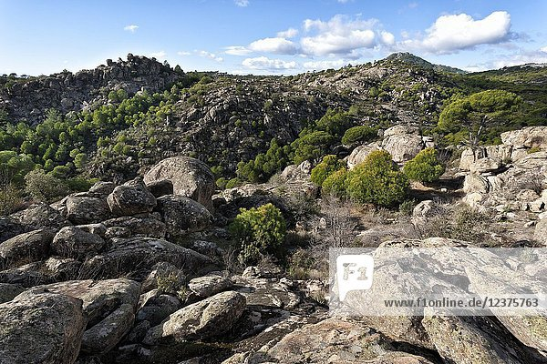 Granite and pines at Labros hill and Muniana cliff on the background. Cadalso de los Viddrios. Madrid. Spain.