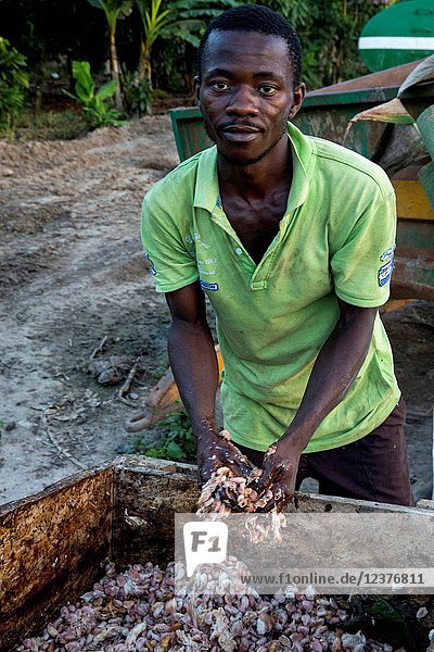 Young farmer with cocoa pulp.