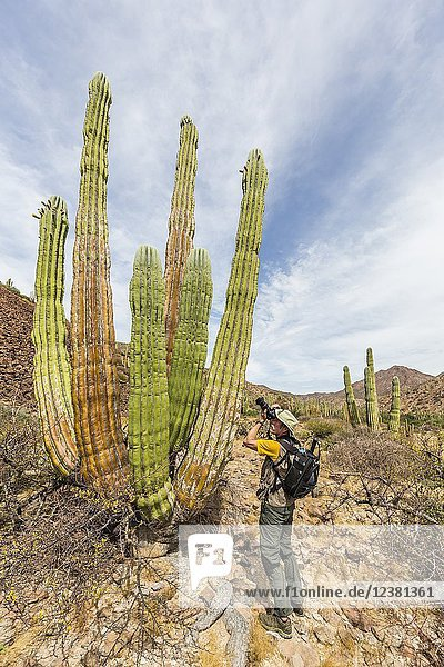 Photographer with Mexican giant cardon  Pachycereus pringlei  Isla San Esteban  Baja California  Mexico.