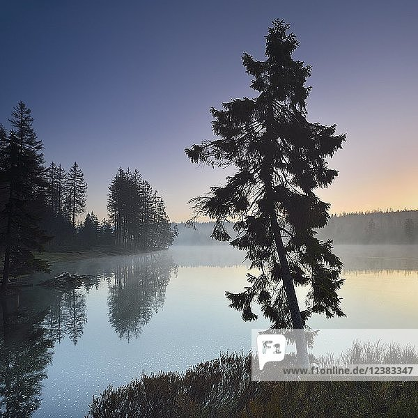 Dawn at the Oder pond  morning mist  spruce forest on the shore  Harz National Park  Lower Saxony  Germany  Europe Dawn at the Oder pond, morning mist, spruce forest on the shore, Harz National Park, Lower Saxony, Germany, Europe