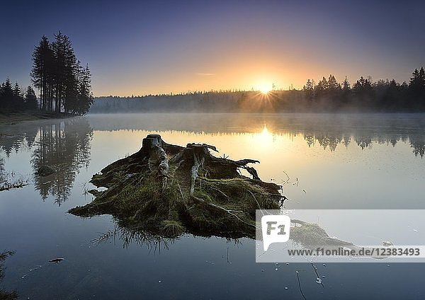 Sunrise with morning mist at the Oder pond  small island with tree stumps and roots  Harz National Park  Lower Saxony  Germany  Europe Sunrise with morning mist at the Oder pond, small island with tree stumps and roots, Harz National Park, Lower Saxony, Germany, Europe