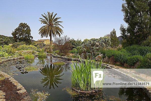 Gartenteich mit Lilien  mediterrane Pflanzen  Botanischer Garten  Sóller  Serra de Tramuntana  Mallorca  Balearen  Spanien  Europa