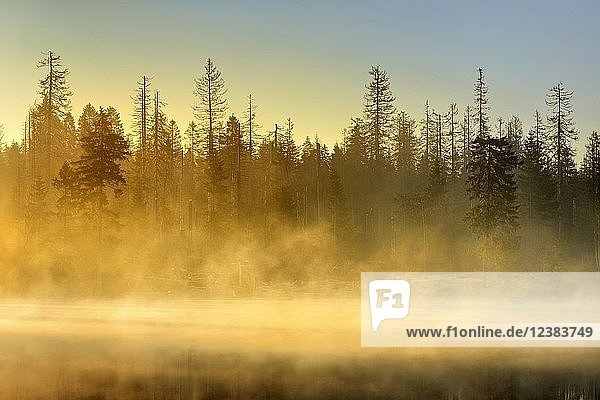 Sunrise at the Oder pond with morning mist  natural forest  spruces partly dead due to bark beetle infestation  Harz National Park  Lower Saxony  Germany  Europe Sunrise at the Oder pond with morning mist, natural forest, spruces partly dead due to bark beetle infestation, Harz National Park, Lower Saxony, Germany, Europe