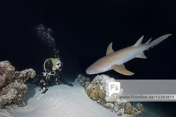 Taucherin betrachtet Hai in der Nacht  Indopazifischer Ammenhai (Nebrius ferrugineus)  Indischer Ozean  Malediven  Asien