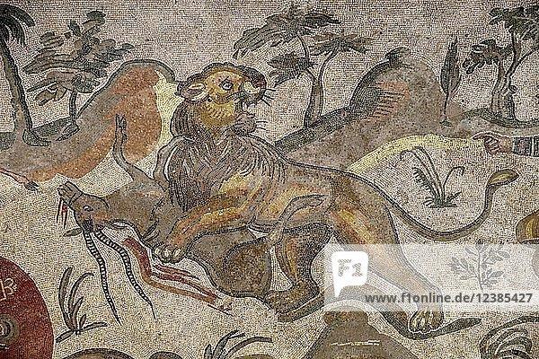Bodenmosaik eines Löwen  der eine Antilope reißt  Korridor der großen Jagd  Villa Romana del Casale  römische Villa aus dem 4. Jahrhundert n. Chr.  Piazza Armerina  Provinz Enna  Sizilien  Italien  Europa