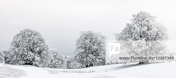 Winterlandschaft  mit Frost überzogene Bäume im Winter  Mont Salève  Archamps  Frankreich  Europa