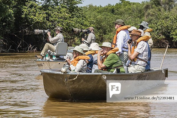 Tourists photographing a sleeping jaguar from small boats on Rio Picuiri  Mato Grosso  Pantanal  Brazil.