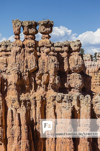 View of hoodoo formations from the Navajo Loop Trail in Bryce Canyon National Park,  Utah,  USA.