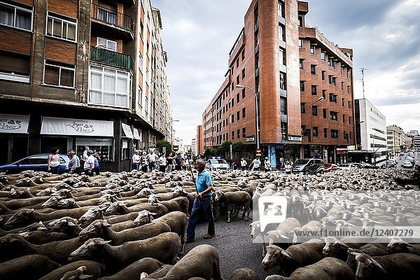 Large flock of sheep transits through the streets of the city of Soria during the transhumance routes that takes place in late spring in Spain.