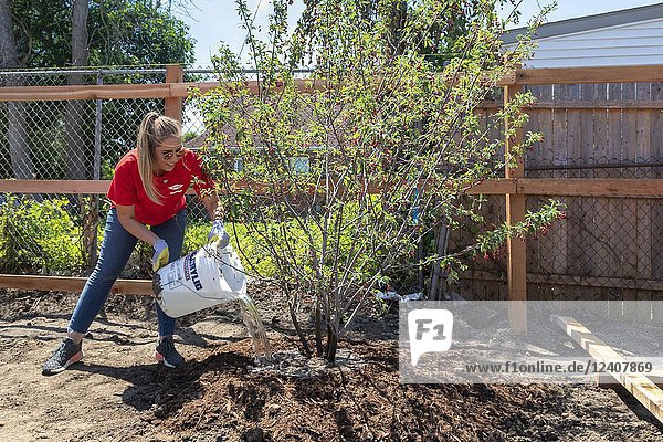 Detroit  Michigan - Volunteers help build a new community park in the Morningside neighborhood. Many of the volunteers are college student summer interns at Cooper Standard and Dow Chemical. The park is being built on 1. 5 acres made vacant when abandoned houses were demolished.