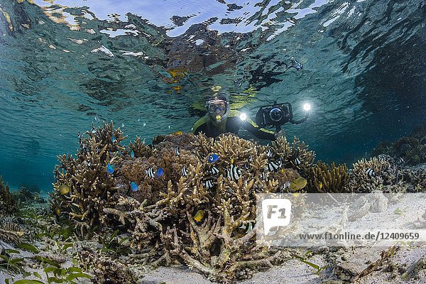 Photographer on the house reef at Komodo Diving Resort  Sebayur Island  Flores Sea  Indonesia.