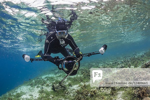 Banded sea krait  Laticauda colubrina  with photographer on Sebayur Island  Flores Sea  Indonesia.